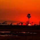 Botswana sunset. by Lyn Darlington