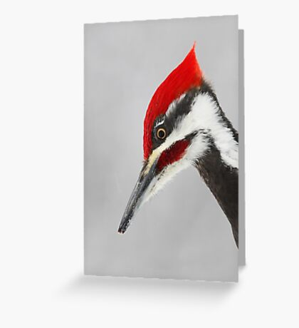 Pileated Woodpecker Portrait Greeting Card