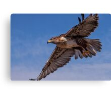 Ferruginous Hawk in Flight Canvas Print
