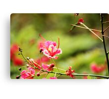 Beauty out in nature Canvas Print