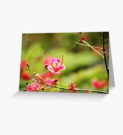 Beauty out in nature Greeting Card