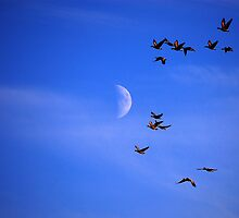 Migration by Macrae images