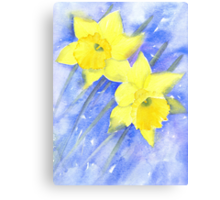 Daffies in the wind on a cold March day Canvas Print