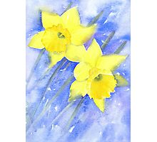 Daffies in the wind on a cold March day Photographic Print