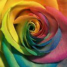 rainbow rose by clayton  jordan