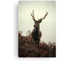 Stag in a blizzard Canvas Print