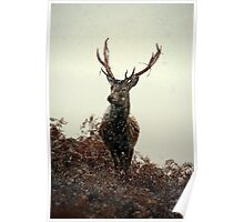 Stag in a blizzard Poster