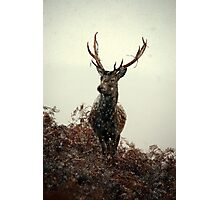 Stag in a blizzard Photographic Print