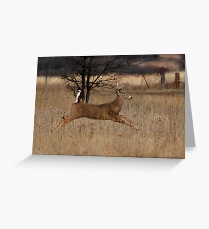 Grass Hopper - White-tailed Deer Greeting Card