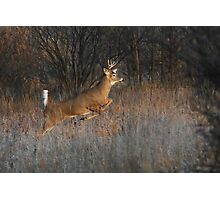 Buck on the Run - White-tailed Deer Photographic Print