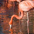 Flamingos by Norma Cornes