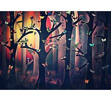 The Woods at Sunset Photographic Print