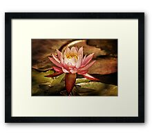 Illusory Lily Framed Print