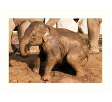 Muddy baby elephant Art Print
