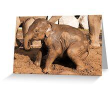 Muddy baby elephant Greeting Card
