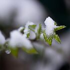 I thought spring was here... by Cédric Charbonnel