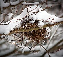 Abandoned birds nest in Winter by BrianFitePhoto