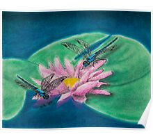 Dragonflies On Water Lily Poster