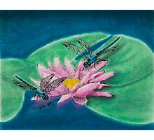 Dragonflies On Water Lily Photographic Print