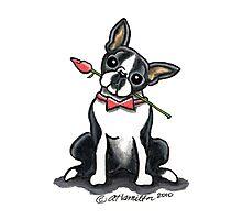 Boston Terrier Sweetheart Photographic Print