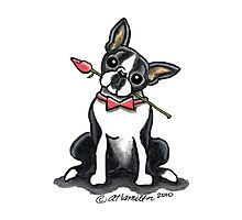 Boston Terrier Sweetheart Photographic Print