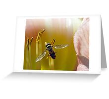 Hoverfly inside Daylily Greeting Card