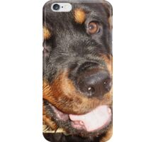 Portrait Of A Gentle Faced Female Rottweiler  iPhone Case/Skin