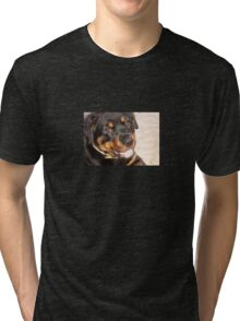 Portrait Of A Gentle Faced Female Rottweiler  Tri-blend T-Shirt