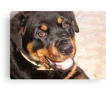 Portrait Of A Gentle Faced Female Rottweiler  Canvas Print