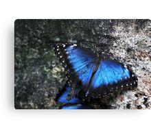 Cobalt Blue Butterfly Canvas Print