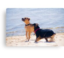 Bailey and Joey Canvas Print