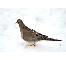 Dove Photographic Print