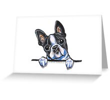 Curious Boston Terrier Greeting Card