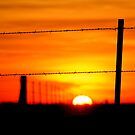 Sunset in fence by Wulfhere