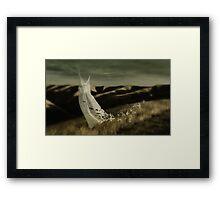 As free as a bird Framed Print