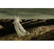 As free as a bird Photographic Print