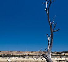Dead tree by Tom's Coloncardz (Tom Slowinski)