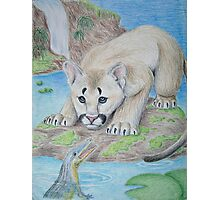 Baby Cougar with Alligator Photographic Print