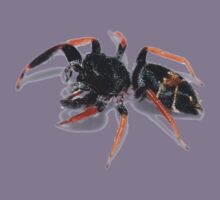 Jumping Spider Kids Clothes