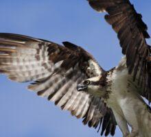 Osprey Wingspan Sticker