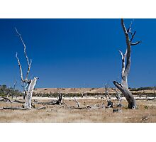 dead trees Photographic Print
