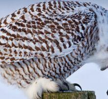 Cough it up buddy - Snowy Owl Sticker