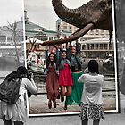 In Africa we hang on elephant tusks by awefaul