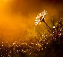 Shining by Balazs Kovacs