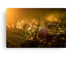 Little snail in the grass Canvas Print