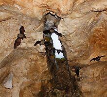 Bat Cave by AnnDixon