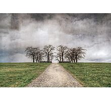 Textured Trees Photographic Print