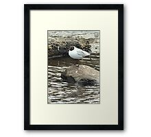 On a rock Framed Print