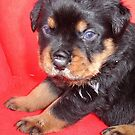 Cute Rottweiler Puppy With Food On Muzzle by taiche