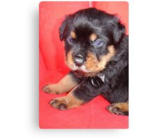 Cute Rottweiler Puppy With Food On Muzzle Canvas Print